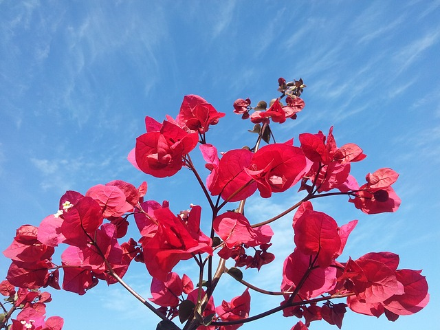 Free flowers sky blue sky red