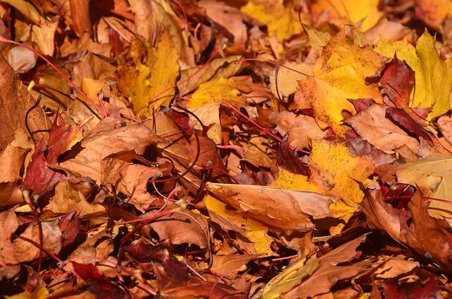 Free leaves tree brown