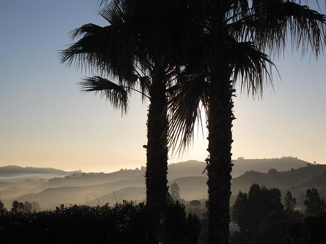 Free Photos: La cala de migas spain sunrise morning palms | David Mark