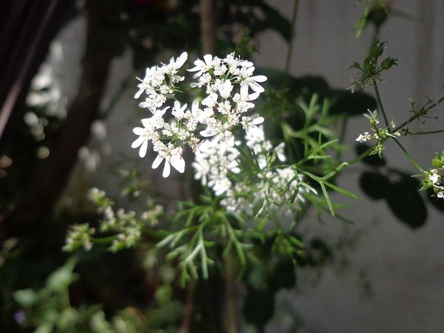Free flowers white flower wildflower