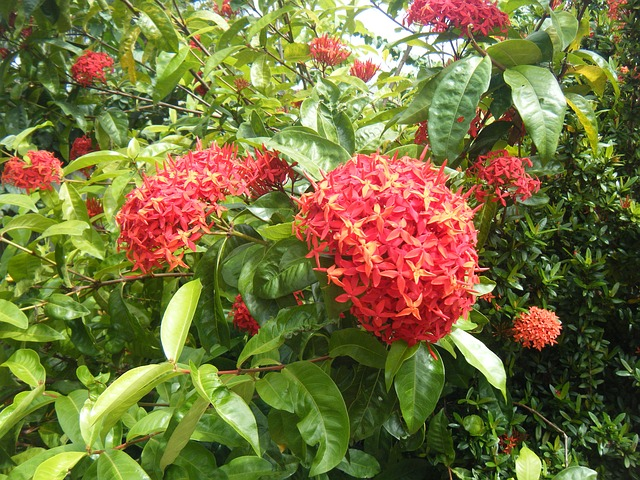 Free flowers red flower flower