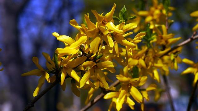 Free spring flower sunshine
