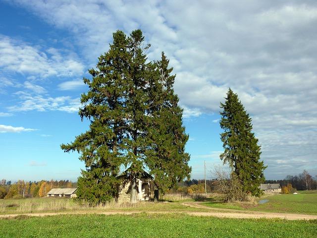 Free Photos: Poland trees landscape scenic grass sky clouds | David Mark