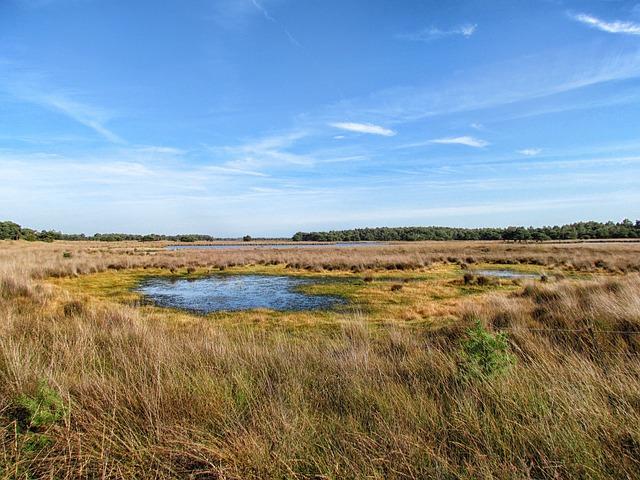 Free netherlands landscape scenic plants grass pond