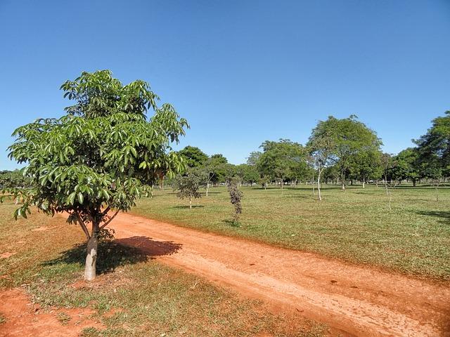Free brasilia brazil landscape scenic sky clouds trees