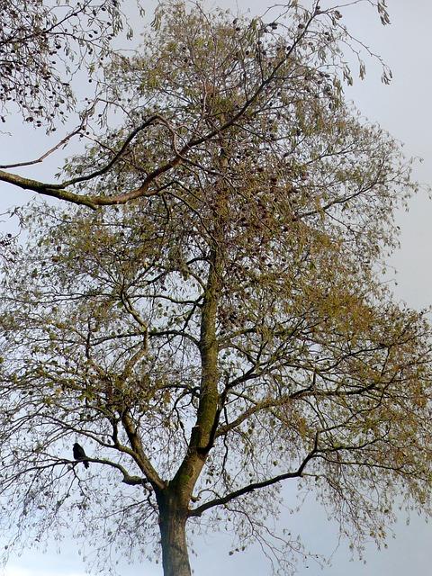 Free tree nature sky bird