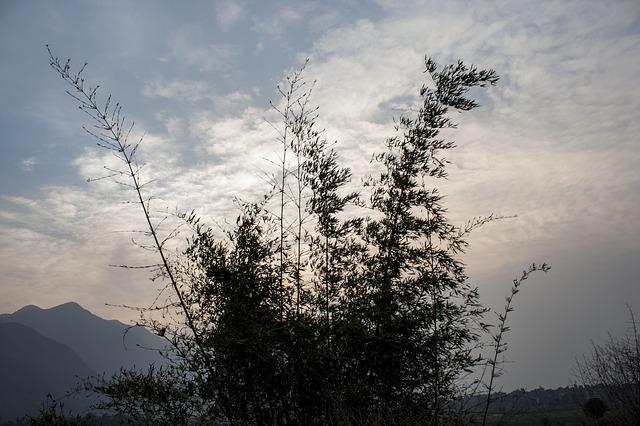 Free bambbo bush cloud sunset sky nature plants brush