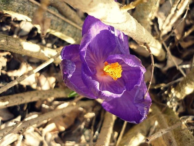 Free flower purple jakr bush amber beauty grace light