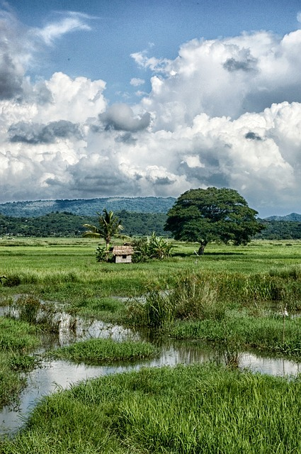 Free philippines landscape scenic hut house forest