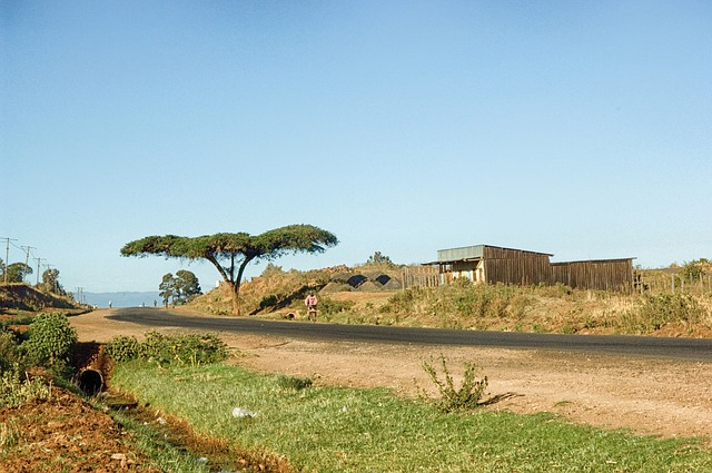 Free kenya landscape scenic tree road trail buildings