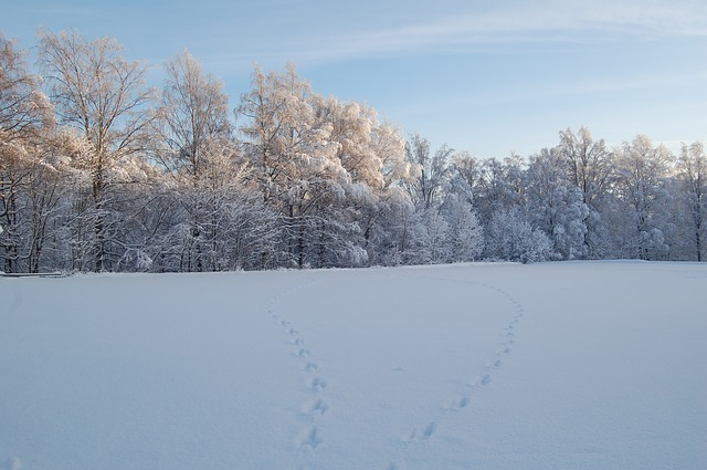 Free snow forest snow landscape winter