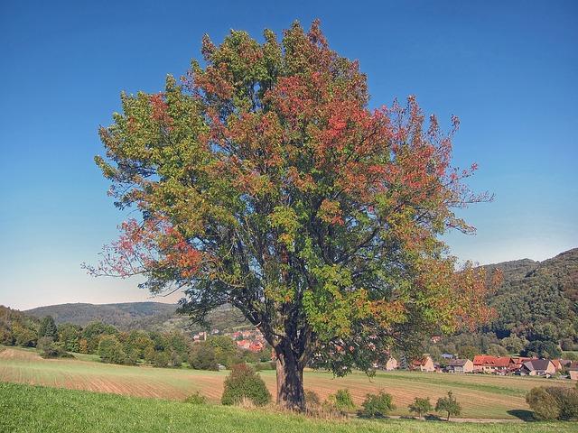 Free bavaria germany tree forest trees woods landscape