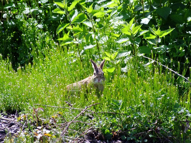 Free hare easter bunny wild rabbit grass