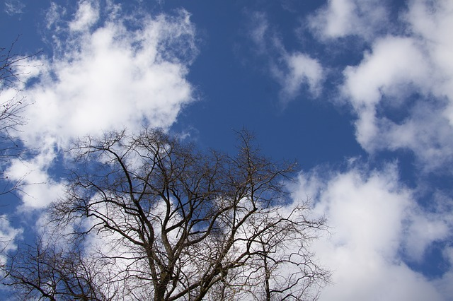 Free tree clouds sky blue silhouette april spring