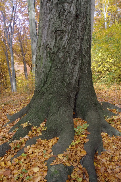 Free autumn log root leaves tree root nature