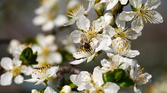 Free spring sunshine bees