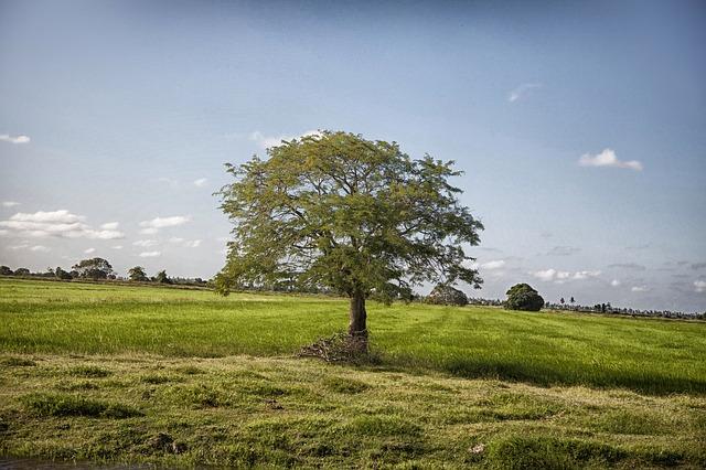 Free guyana landscape sky clouds scenic tree trees