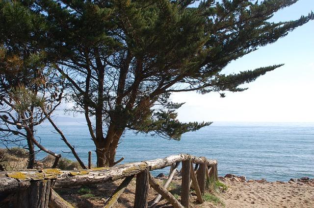 Free side landscape beach pine