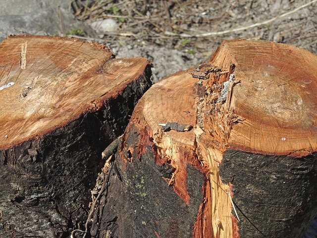 Free wood tree brown section tree cases forest work