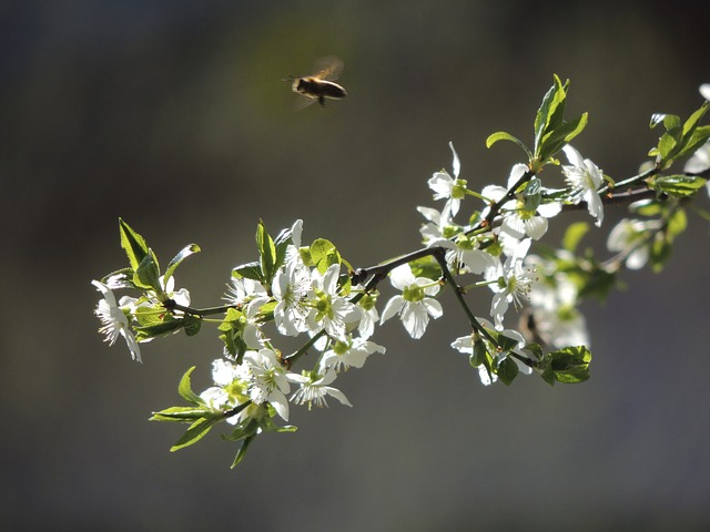 Free plant nature green flowers white show road bee