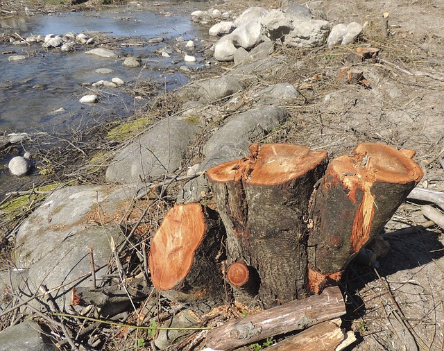Free log wood brown tree cases forest work tree