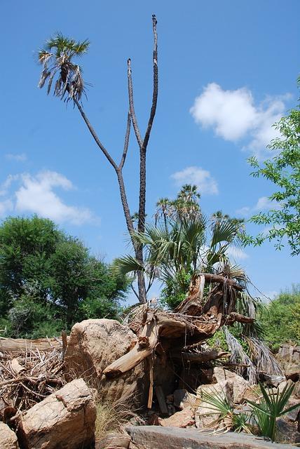 Free kenya africa nature tree