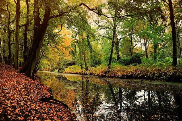 Free nature leaf deciduous forest autumn motive