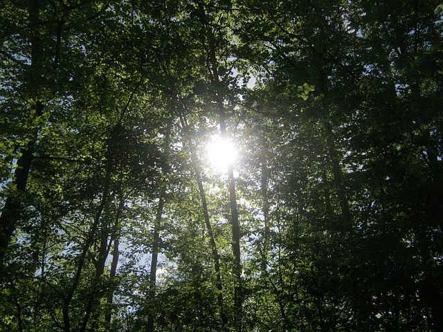 Free forest nature trees crowns background sunlight