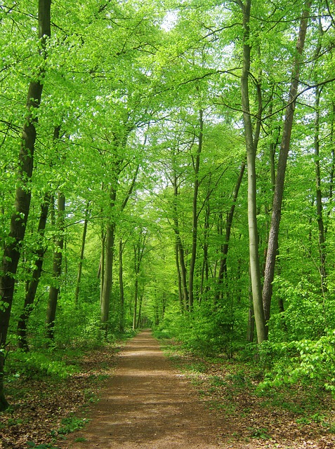 Free forest nature trees background may tender away