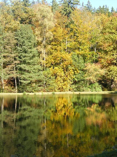 Free autumn emerge pond park tree autumn forest