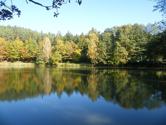 Free autumn emerge pond park tree mirroring trees