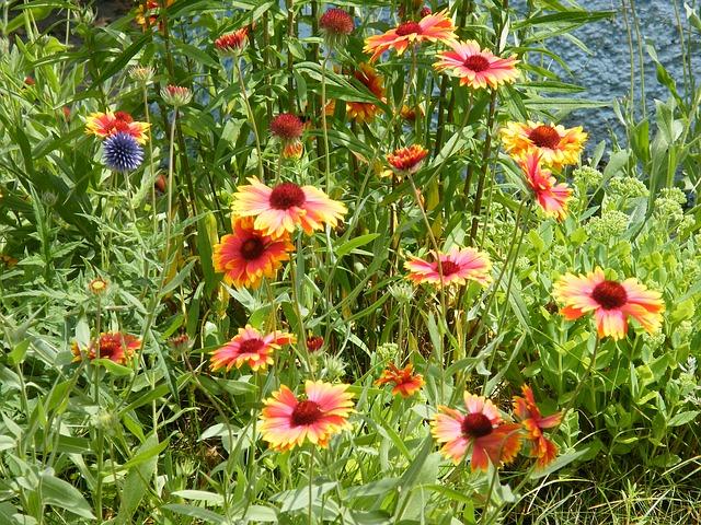 Free summer flowers meadow flower meadow summer flowers
