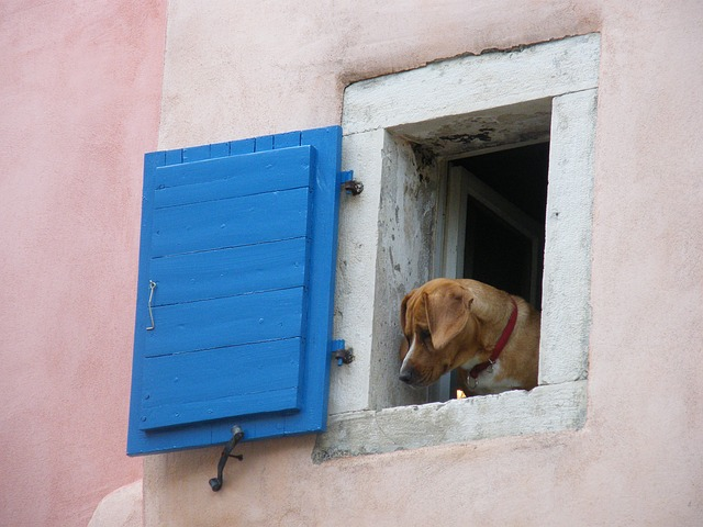 Free dog window funny look old town pets