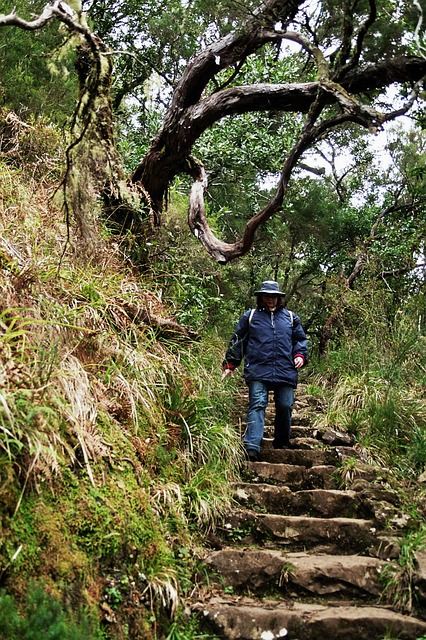 Free madeira highlands mountains summit levada