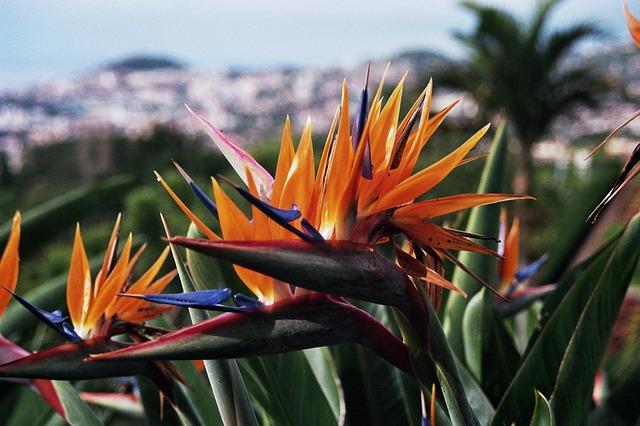 Free madeira botanical garden parrot flower portugal