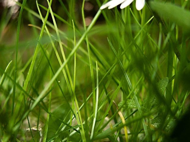 Free grass blade of grass blades of grass green petals