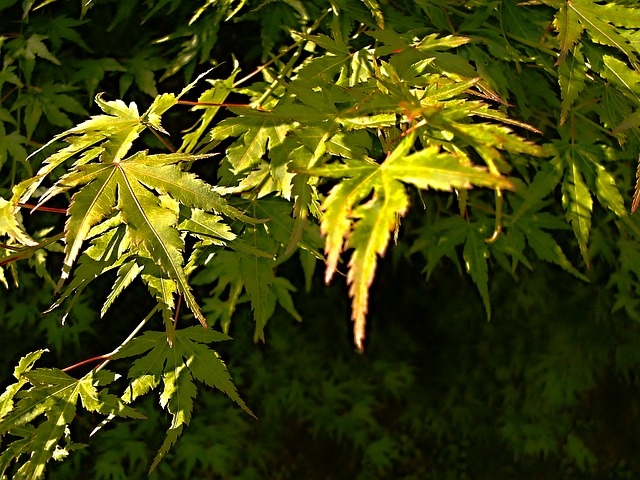 Free foliage green branch plant plants sheet