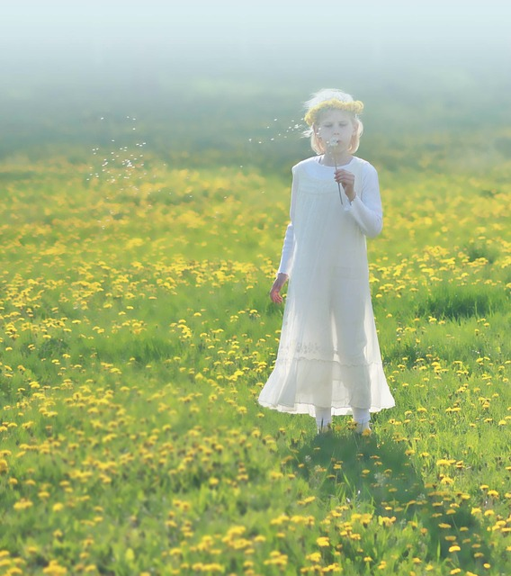 Free dandelion spring yellow serenity