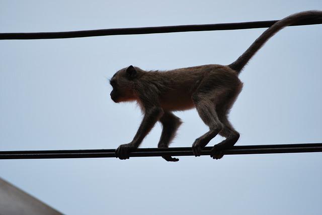 Free monkey äffchen ape