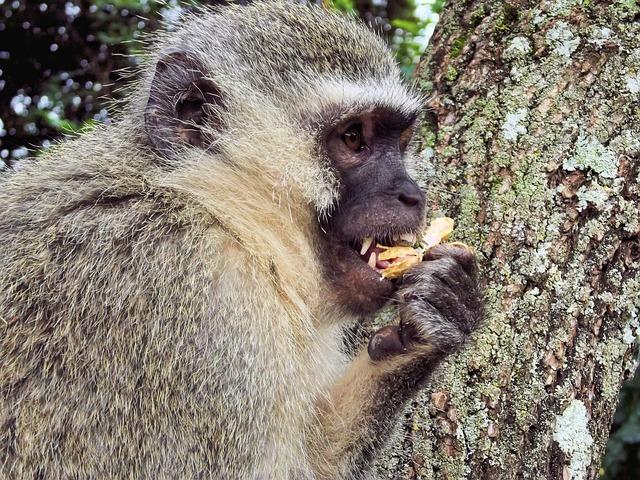 Free monkey monkeys animal monkey family wild mountain