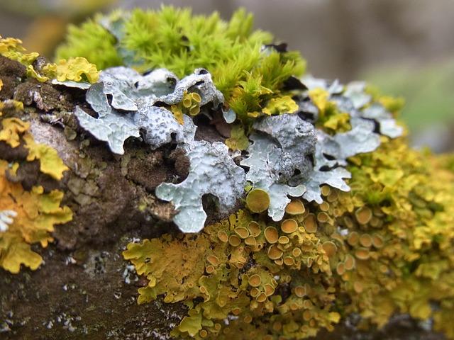 Free moss plant green bark tree