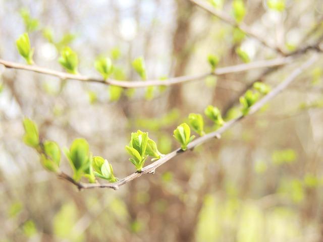 Free branch bud spring garden green journal nature