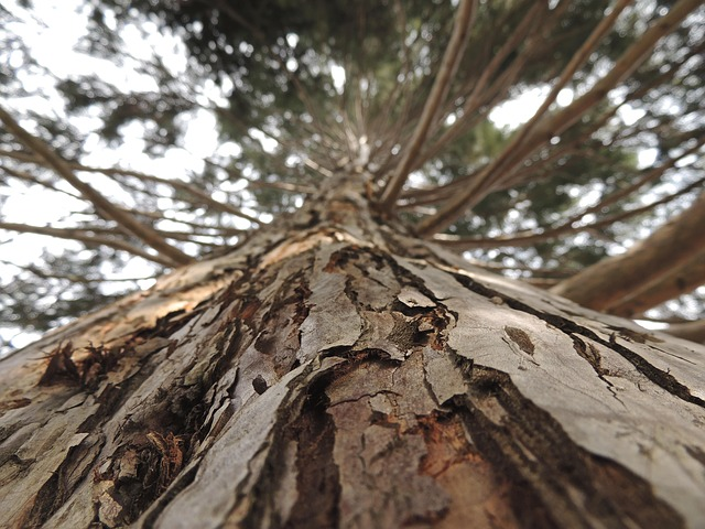 Free tree bark wood brown aesthetic strong plant