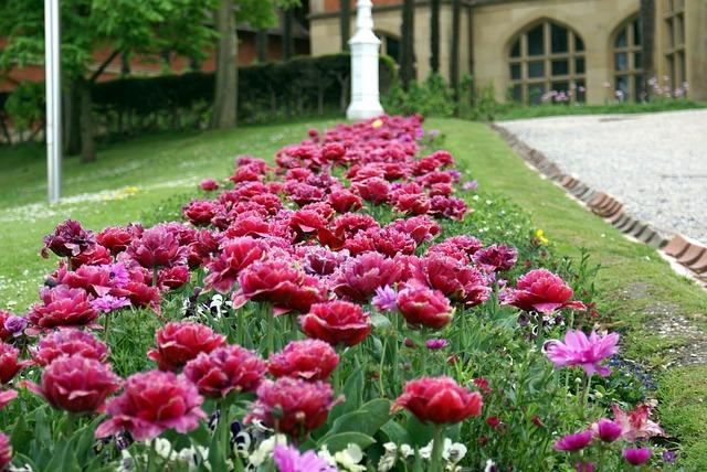 Free garden flowers spring nature