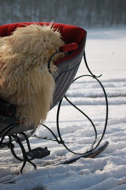 Free horse drawn sleigh winter snowfield cold