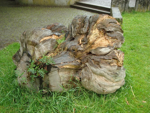 Free wood root nature green