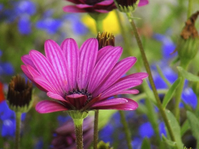 Free Photos: Flower purple nature garden macro | Florian Pircher