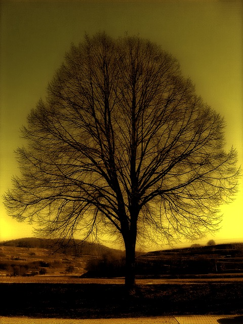 Free tree kahl winter atmosphere yellow solitary