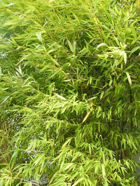 Free bamboo asia garden green summer close leaves