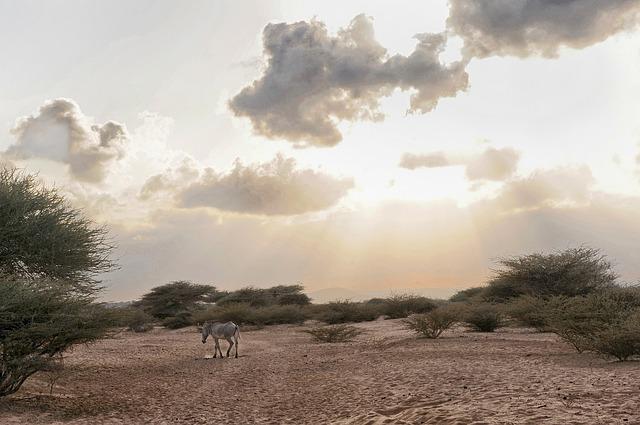 Free djibouti zebra animal wildlife sky clouds